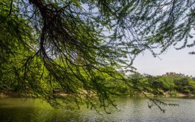 Hauz Khas lake- Story of revival of Heritage Wetland